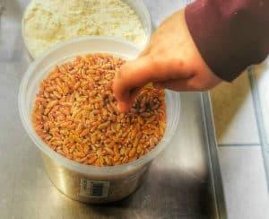 Photo du blé dur de la ferme des Mottes à Marquillies dans le Nord