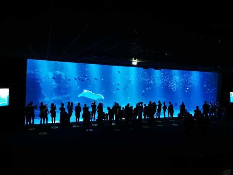 Nausicaa, des aquariums à découvrir